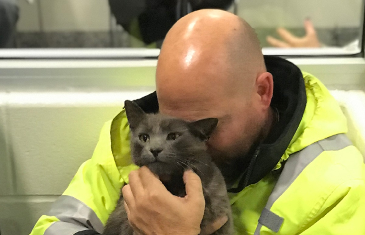 Un camionneur fond en larmes en retrouvant son chat perdu depuis des mois