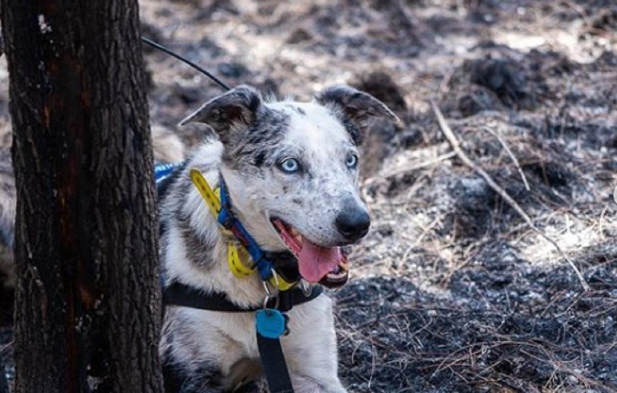 Tom Hanks veut que Disney fasse un film sur le chien qui sauve des koalas en Australie