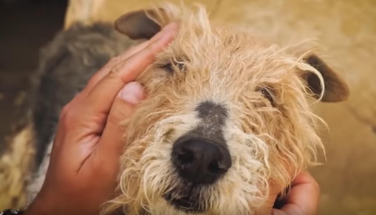 Une chienne attachée pendant des années retrouve enfin sa liberté et sa réaction fait chaud au coeur!