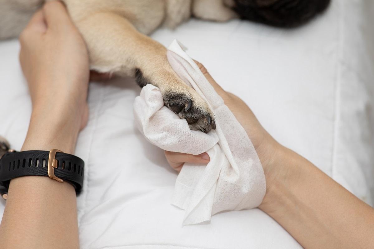 Journée chaude : Danger de brûlures pour les pattes de votre chien!